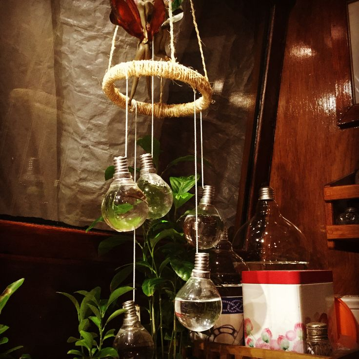 Aksdesign🐲 Lightbulbs with water.