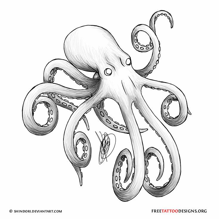 North Pacific Giant Octopus tattoos | 66 Octopus Tattoo Designs