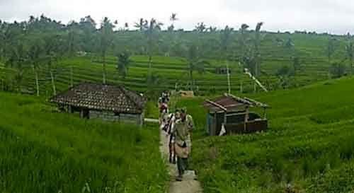 Rice paddy Trekking Jatiluwih Bali