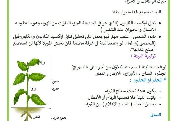 تركيبة النبتة مكونات النبتة أجزاء النبتة موقع مدرستي Liar Bullet Journal