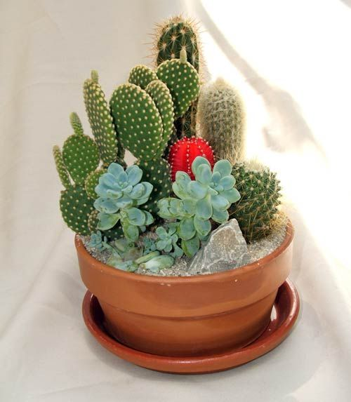 25 best ideas about dish garden on pinterest terrarium indoor succulents and southwestern - Dish garden containers ...