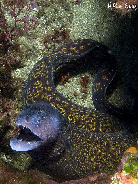 Stay away--moray eel