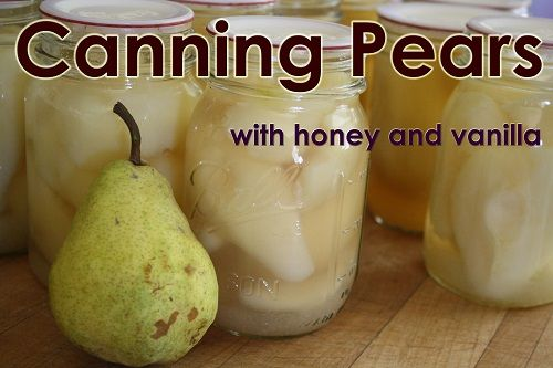 Canning pears with honey and Vanilla!  Yum.   http://www.simplycanning.com/canning-pears.html SimplyCanning.com