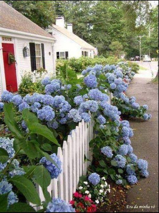 17 meilleures images propos de fleurs la barri re du for A propos du jardin