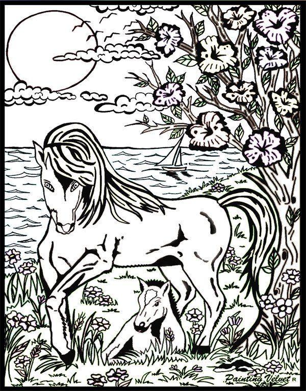 Eccezionale Oltre 25 fantastiche idee su Disegni di cavalli su Pinterest  HV48