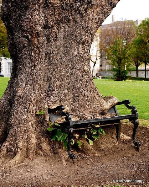 "Irish Archaeology on Twitter: ""'The Hungry Tree', Phibsborough, Dublin http://t.co/IZ5awhcKNh"""