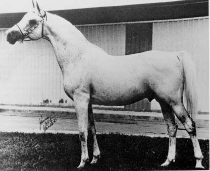 Azraff (*Raffles x Azja IV by Landsknecht (PASB 211)) June 4, 1949 - April 27, 1978