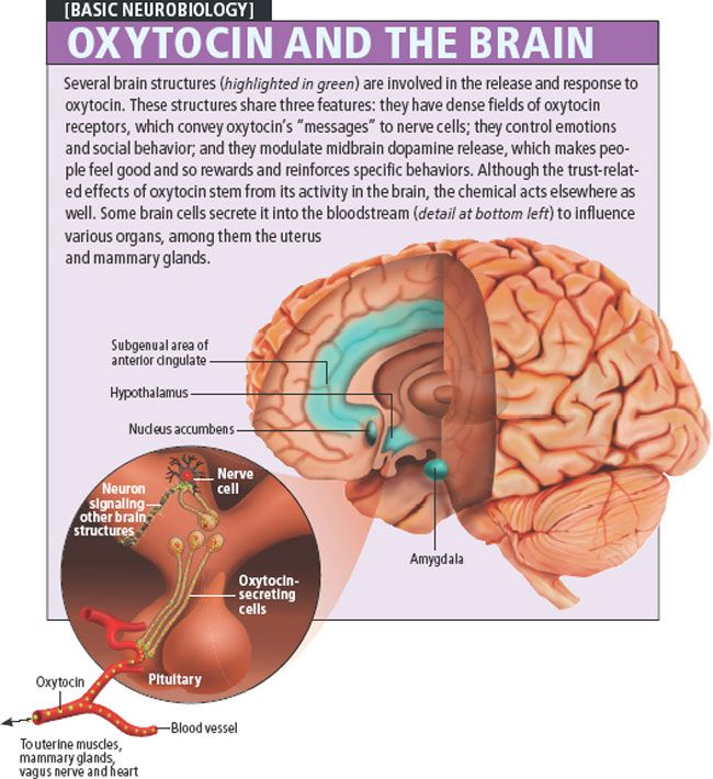 Feel good oxytocin and the brain (infographic)