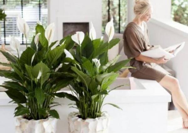 10 Tanaman Pembersih Udara yang Bisa Percantik Ruangan