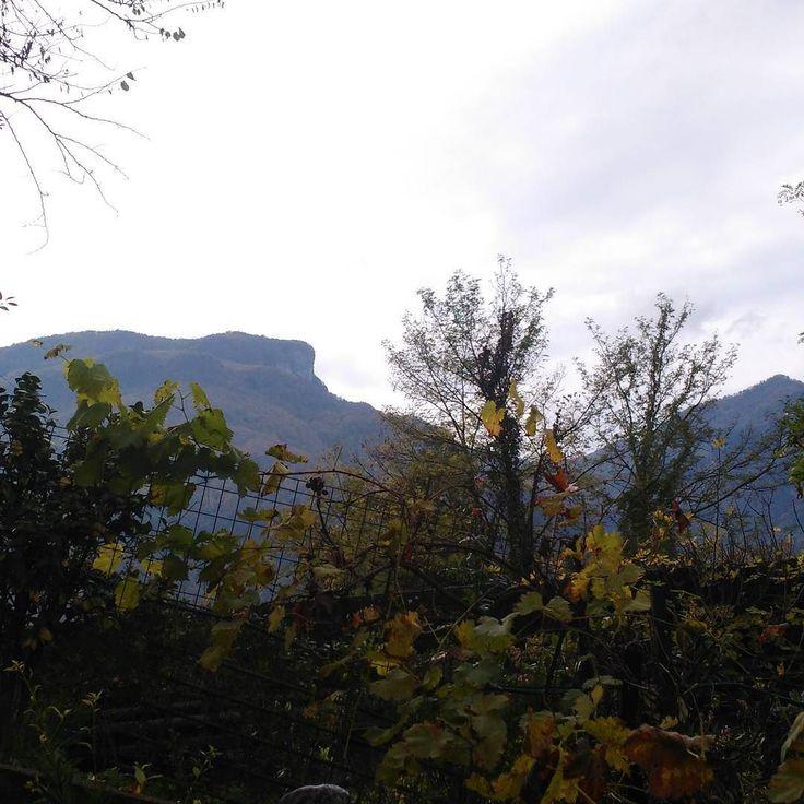 #IlSoleDentro (perché fuori non c'è..) #4novembre #2017 #day4 #giornodopogiorno #daybyday #phoneography #nofilter #giornatacosì #montegragno #toscana #tuscany #italia#italy #naturallife #naturelover #firstpostoftheday #natura