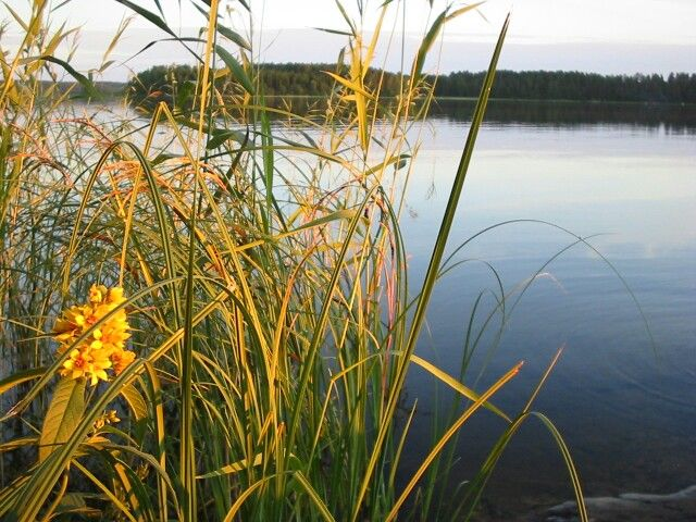 Summer evening by Lake Saimaa, Finland