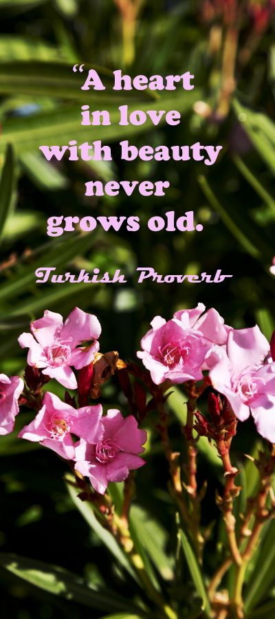 """""""A heart in love with beauty never grows old.""""  Turkish Proverb – Examine inspiring touchstone quotes at http://www.examiner.com/article/over-thirty-touchstone-quotes-for-wedding-vows-and-speeches"""