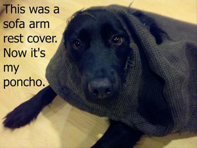 Funny: Dog shaming {Part 3}