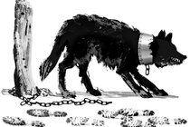 Wereldwijd een groeiend besef over het onrecht dat we dieren aandoen (NYTimes.com)