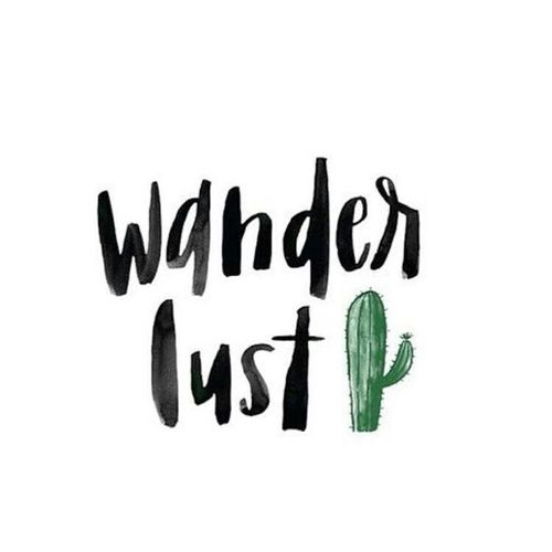 wanderlust, travel, and cactus image