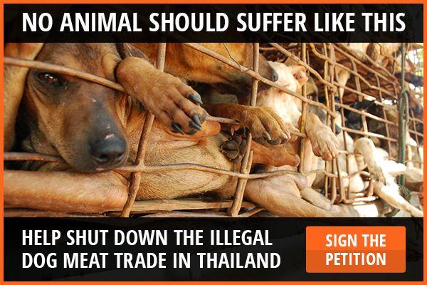 Soi Dog Foundation - Sponsor A Dog Today  #adoptdontshop #enddogmeattrade #crueltyfree  #Animallovers #vegan #animalrights