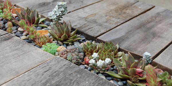 les 216 meilleures images propos de jardin sur pinterest jardins planters et albizia. Black Bedroom Furniture Sets. Home Design Ideas