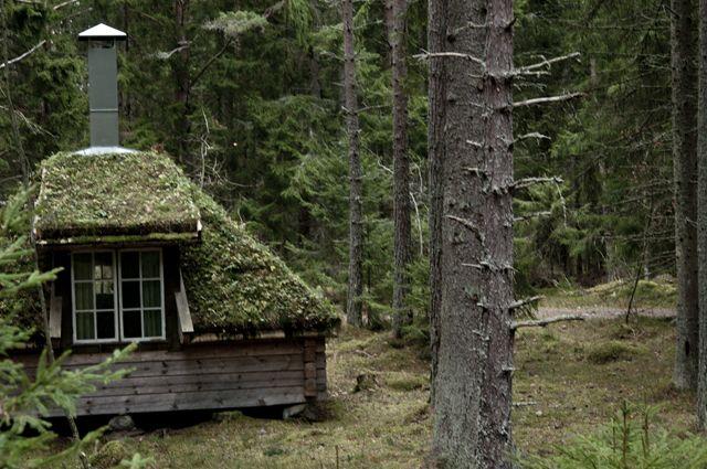 mossy roof:: Urnatur via love it a lot