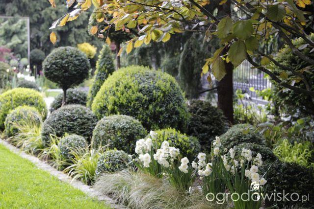 Wizytówka - Ogród nie tylko bukszpanowy - Forum ogrodnicze - Ogrodowisko