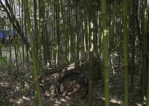 Old Bamboo Cart