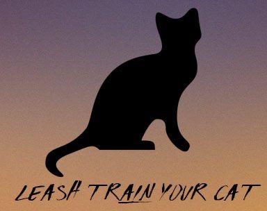 Training Cats - Cat - Training