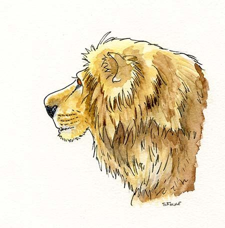 Wildlife drawings – Big Cats by Stuart Fowle