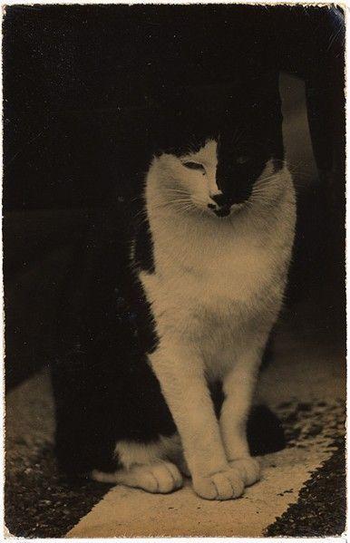 Beautiful kitty - xoxoxo :). photography by Masao Yamamoto, Japan