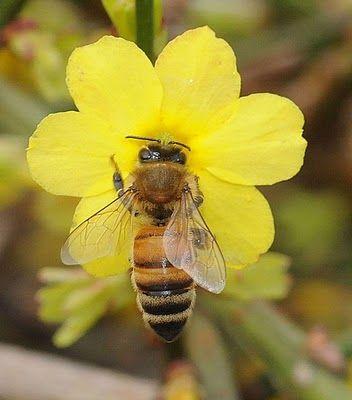 Flower Attracting Bees are the Pollinators of Garden