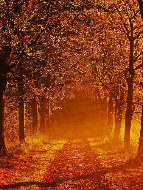 Autumn in Landgoed Groeneveld, Baarn, Netherlands