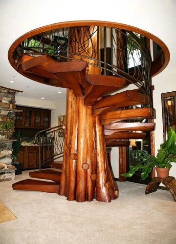 Fallen cedar tree spiral staircase