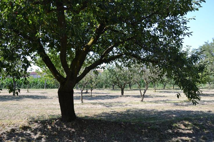 炎天下で枝を広げる大きな木。木陰が有難かった♡で、何の木だったんだろう?