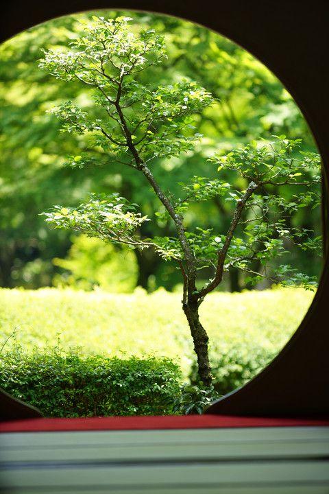 Kamakura, Japan via αcafe | My Sony Club 鎌倉 明月院 #緑 #Green #Kamakura