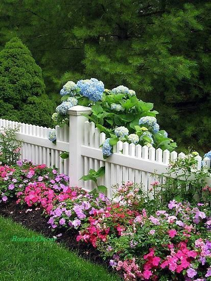 Fence and garden