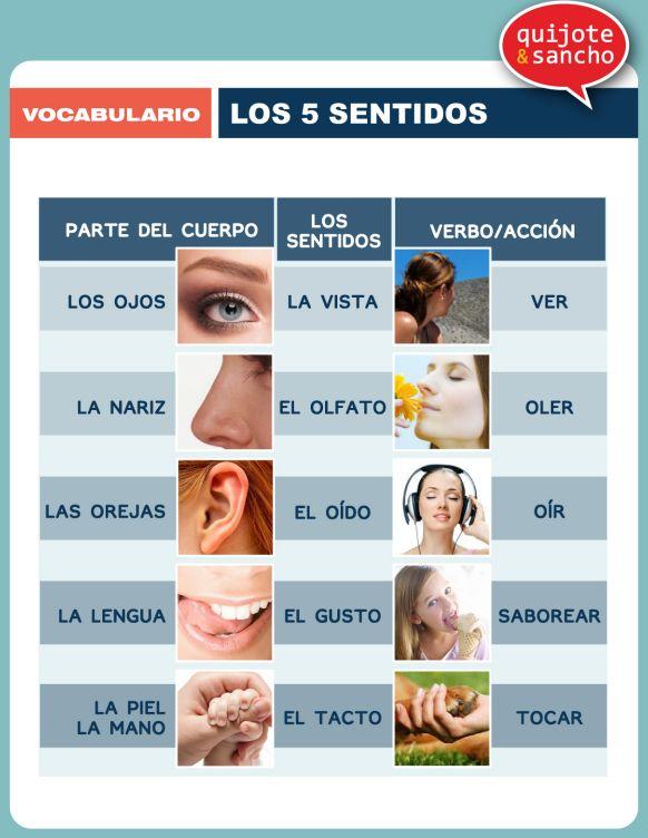 Cuerpo humano: los sentidos. http://quijotesancho.com/vocabulario-2/ Descarga:  http://www.quijotesancho.com/vocabulario/sentidos.pdf