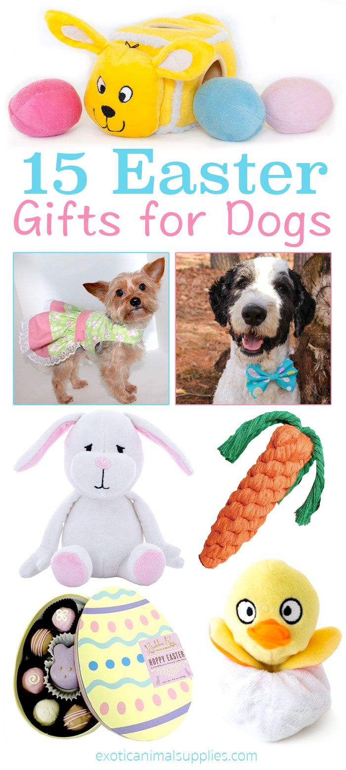 22 best wall e images on pinterest wall e disney disney and robot 15 easter gifts for dogs and puppies these are so cute and perfect for poochs negle Images