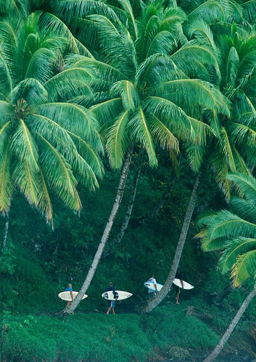 Walking along lush palms en route to the shore.