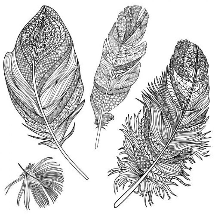 free feathers coloring pages - photo#12