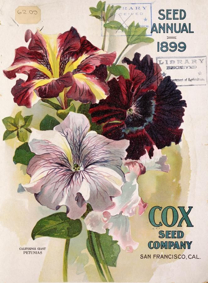 Cox Seed and Plant Company -  Seed and plant annual - 1899
