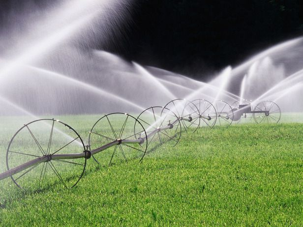How much moisture are your plants getting? Conduct an irrigation audit to find out.