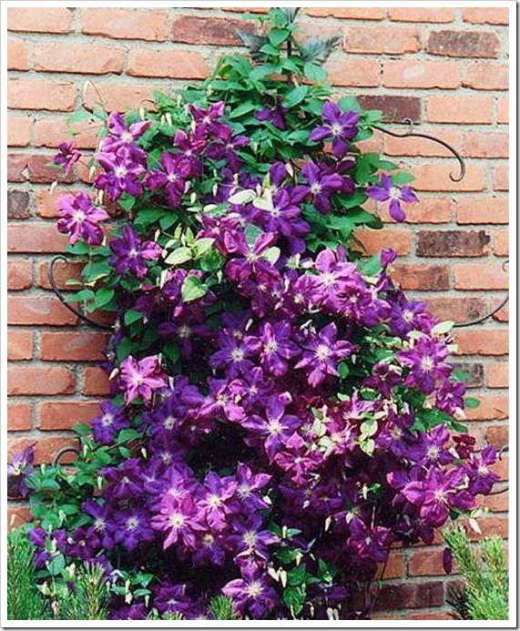 Tips on growing effortless vines (5 varieties included)