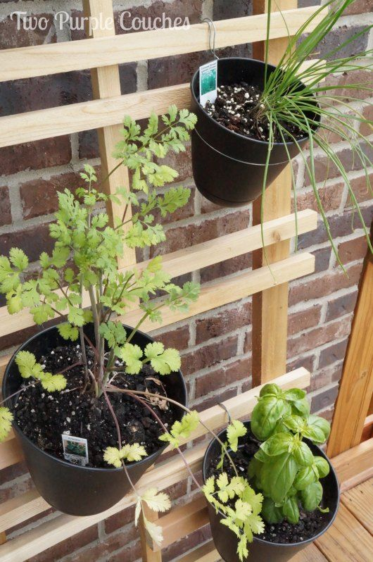 Easy tips for creating your own vertical herb garden