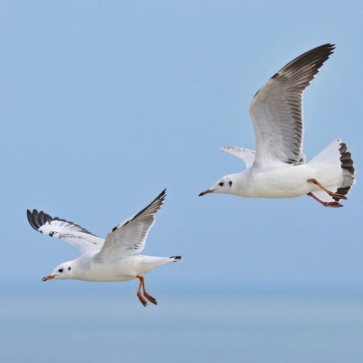 Seagulls flying over the Aegean sea