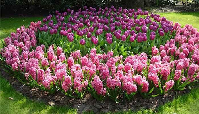 Правильная посадка цветов