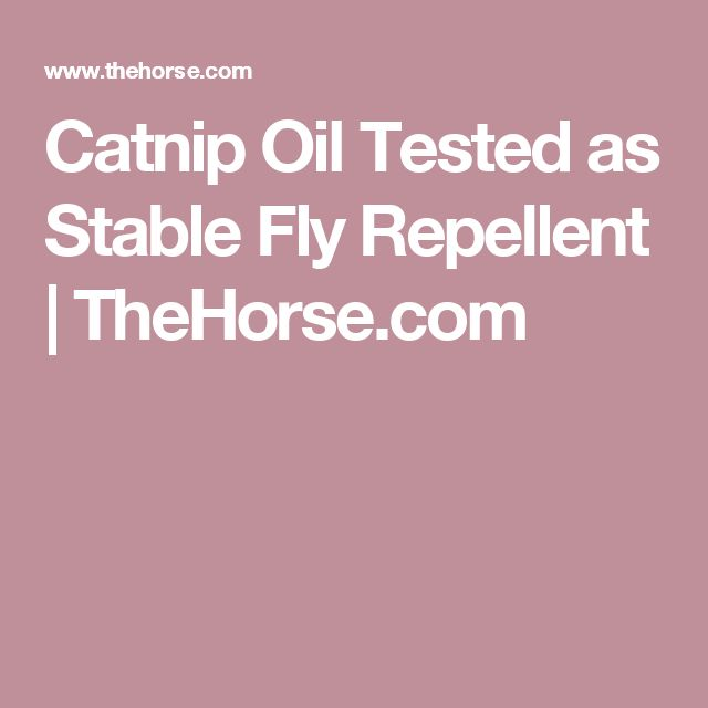 Catnip Oil Tested as Stable Fly Repellent | TheHorse.com