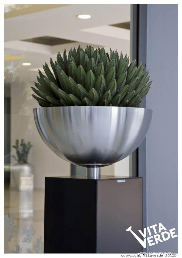 A beautiful Agave plant in a luxury