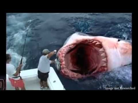 25 best ideas about megalodon shark videos on pinterest