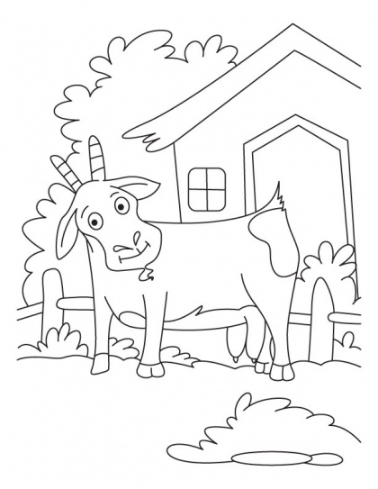 domestic animals coloring pages - photo#46