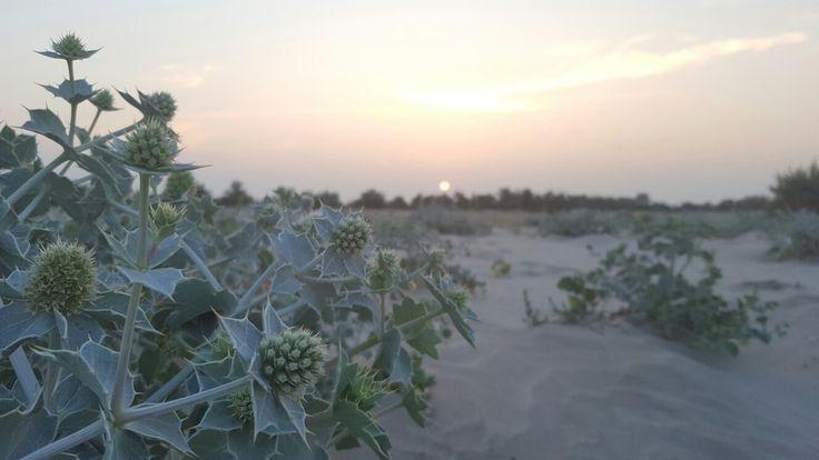 Lovely sunset #danubedelta #nature #romania #seaside