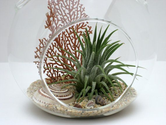 Hanging Terrarium Kit Sundial Seashell with Air by WilliamsGrove