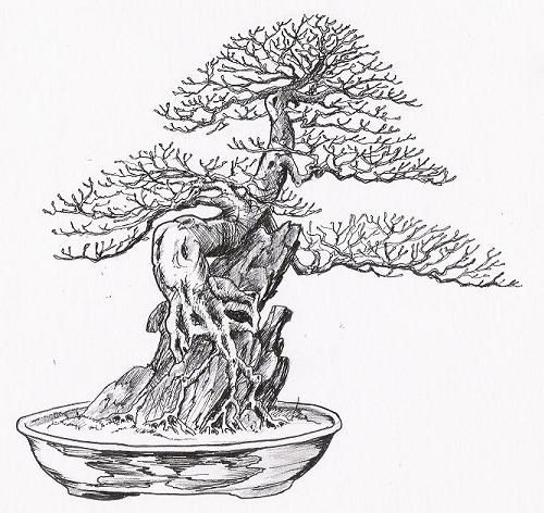 65 best bonsai drawing images on pinterest